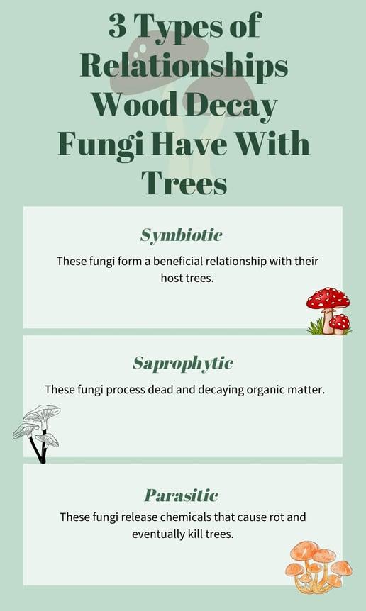 3 categories of tree fungi