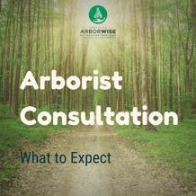 ArboristConsultation