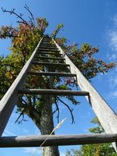 Canva - Tree, Head, Sky, Apple Tree, Luck, Career Ladder