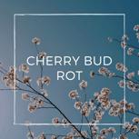 CherryBudRot