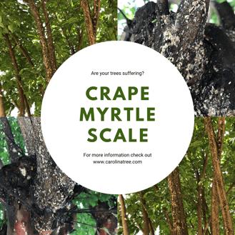 CrapeScale2