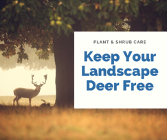 Keep Your Landscape Deer Free