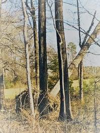 uprooting tree
