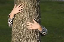 tree health, plant health care near me
