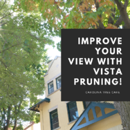 Improve your view with vista pruning!