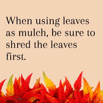 Leaves as mulch 2