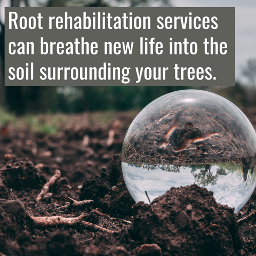 Root rehabilitation can breathe new life into the soil surrounding your trees in Concord, NC