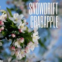Snowdrift crabapple
