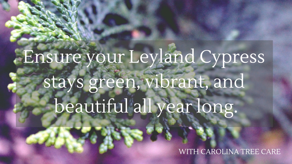Ensure your Leyland Cypress