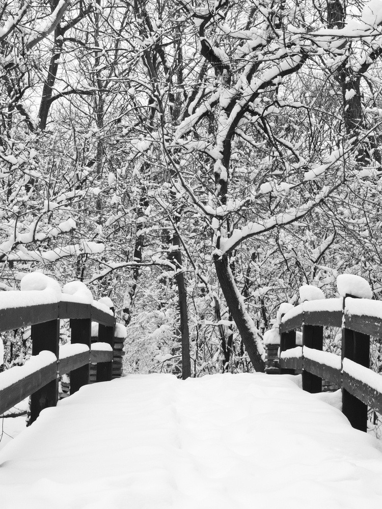 A way to serenity, in black and white Footbridge covered with snow in winter woods.jpeg