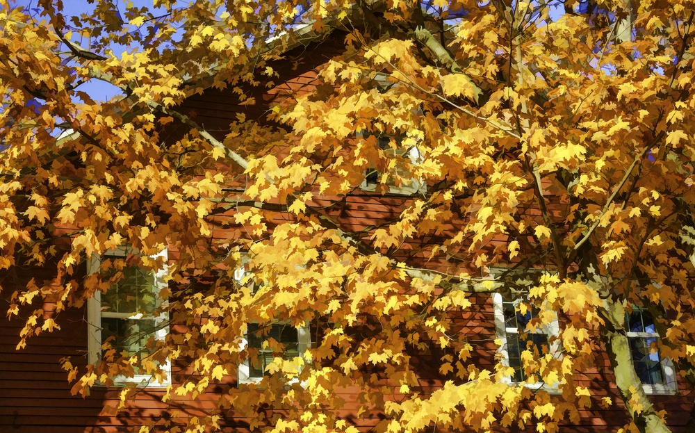 Autumn is in town Vibrant abstract of bright yellow maple foliage overshadowing side of red house, with oil-painting effect