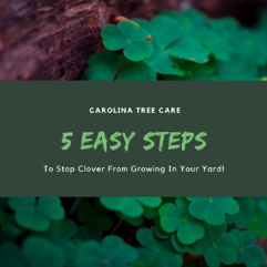 Stop Clover From Growing In Your Yard
