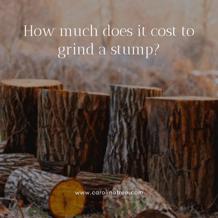 Price of Stumps