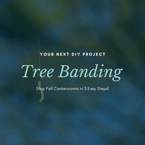 Tree Banding 2