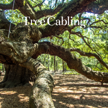 Tree Cabling-1