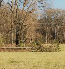 Tree Fallen 2-1