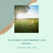 TreePost