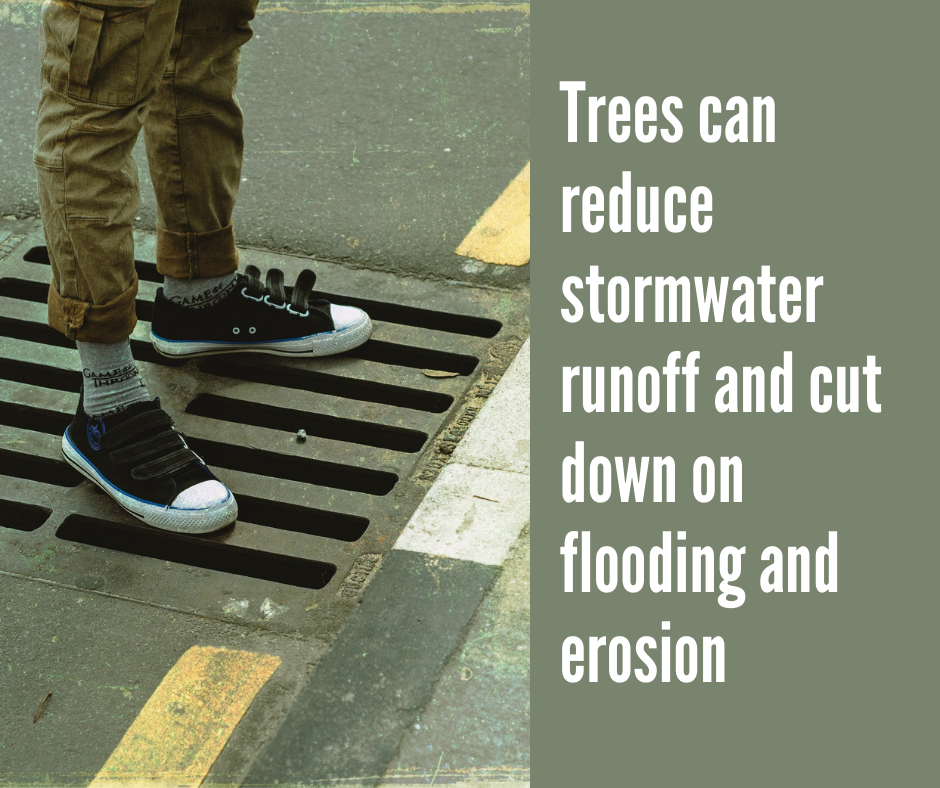 Trees can reduce stormwater runoff in Concord, NC