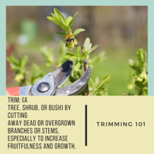 Trimming101